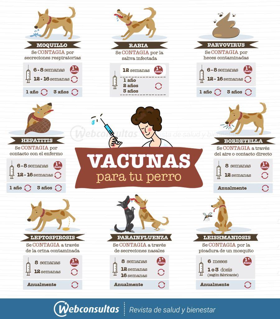 Calendario Perruno.Calendario De Vacunacion Para Tu Perro Las Vacunas