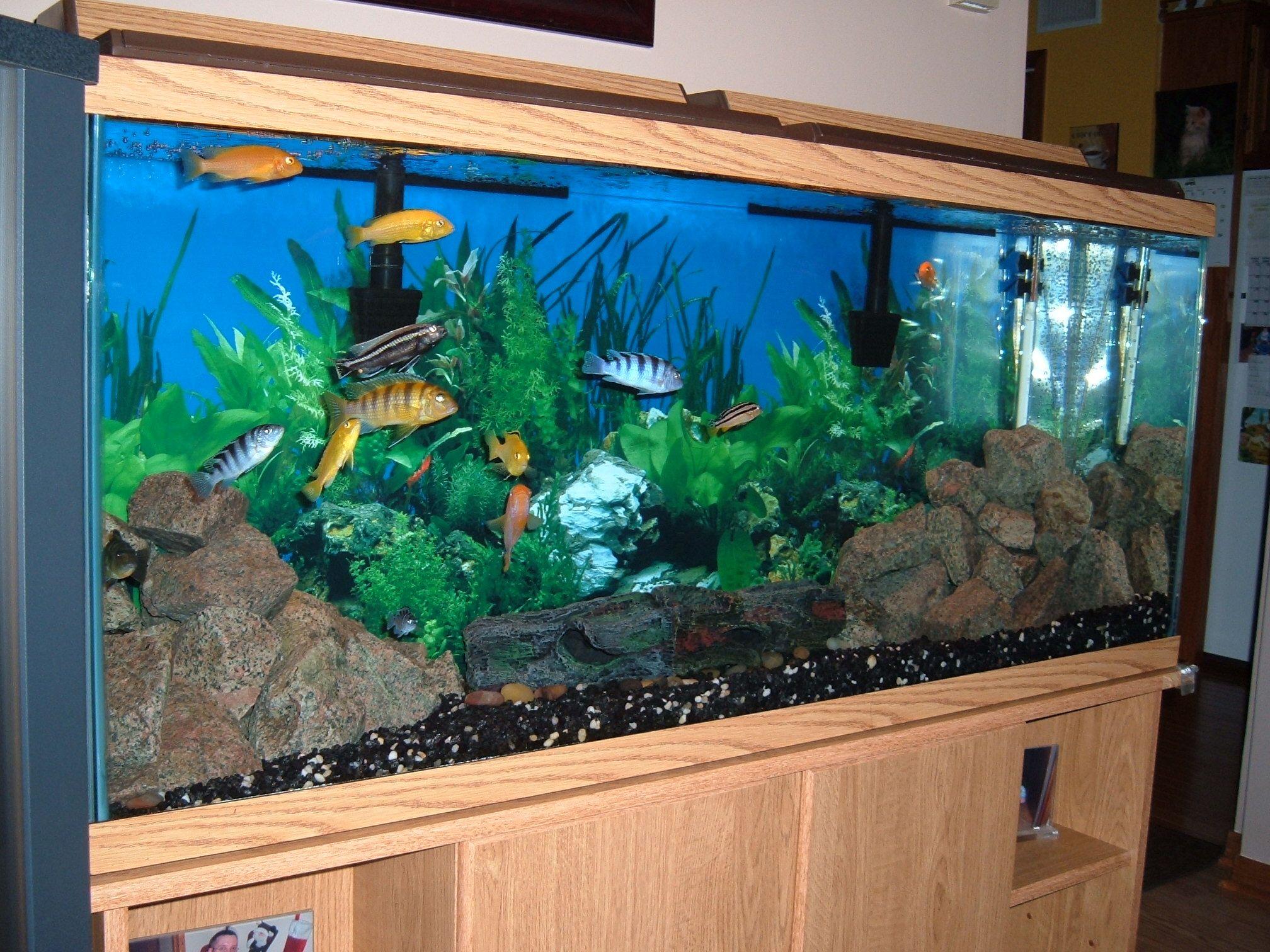 200 Gallon Fish Tank Google Search Aquarium Ideas