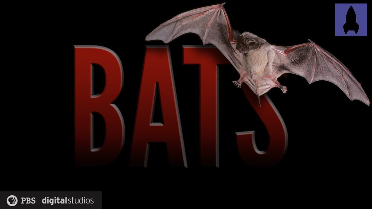 Bats: Wonders of the Night (Science) #bats #science #nature