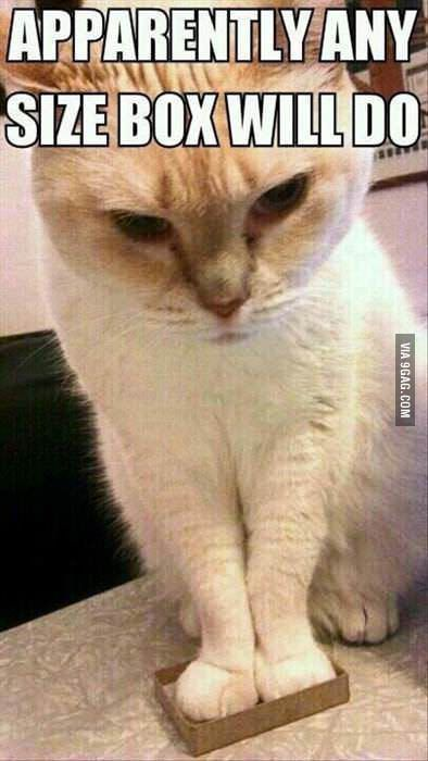 Cats Being Cats Funny Cat Memes Funny Animal Pictures Crazy Cats