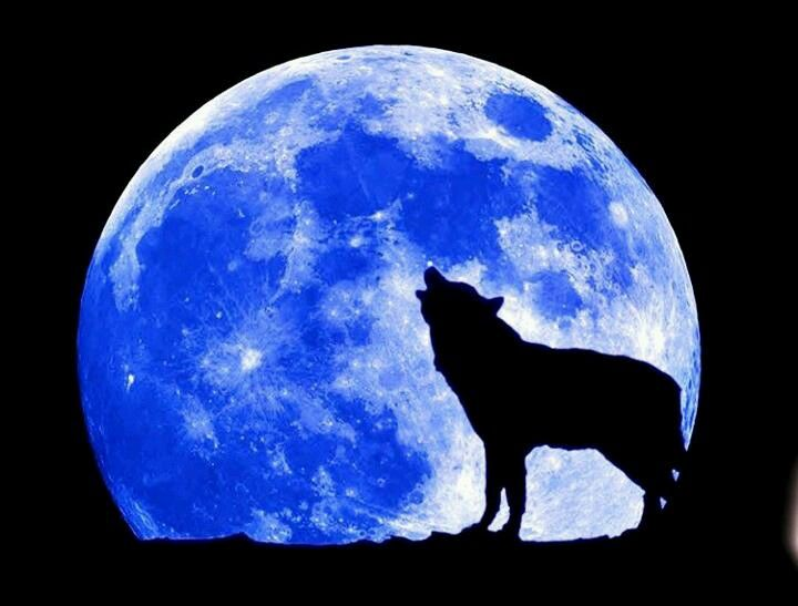 Wolf and moon blue (With images) | Blue moon, Full moon ...