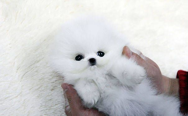 Top Cdog Chubby Adorable Dog - 9be45474026e14a24834f1d6ebaa5e20  Image_6223  .jpg