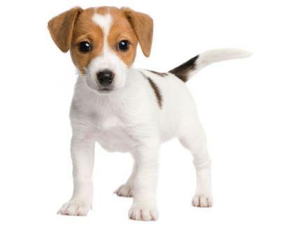 Gut gemocht image de chien - Recherche Google | Chien | Pinterest | Jack  TC41