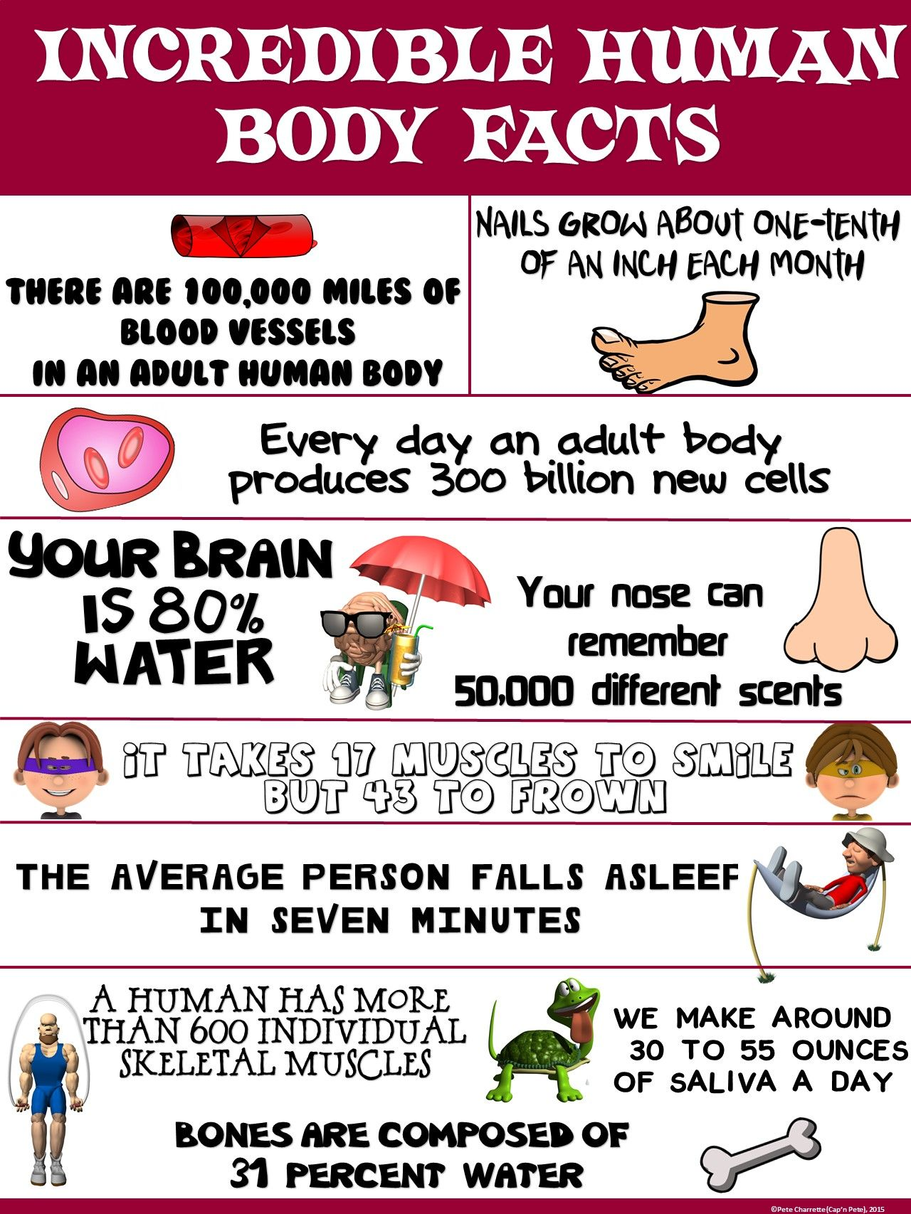 Health And Science Poster Incredible Human Body Facts
