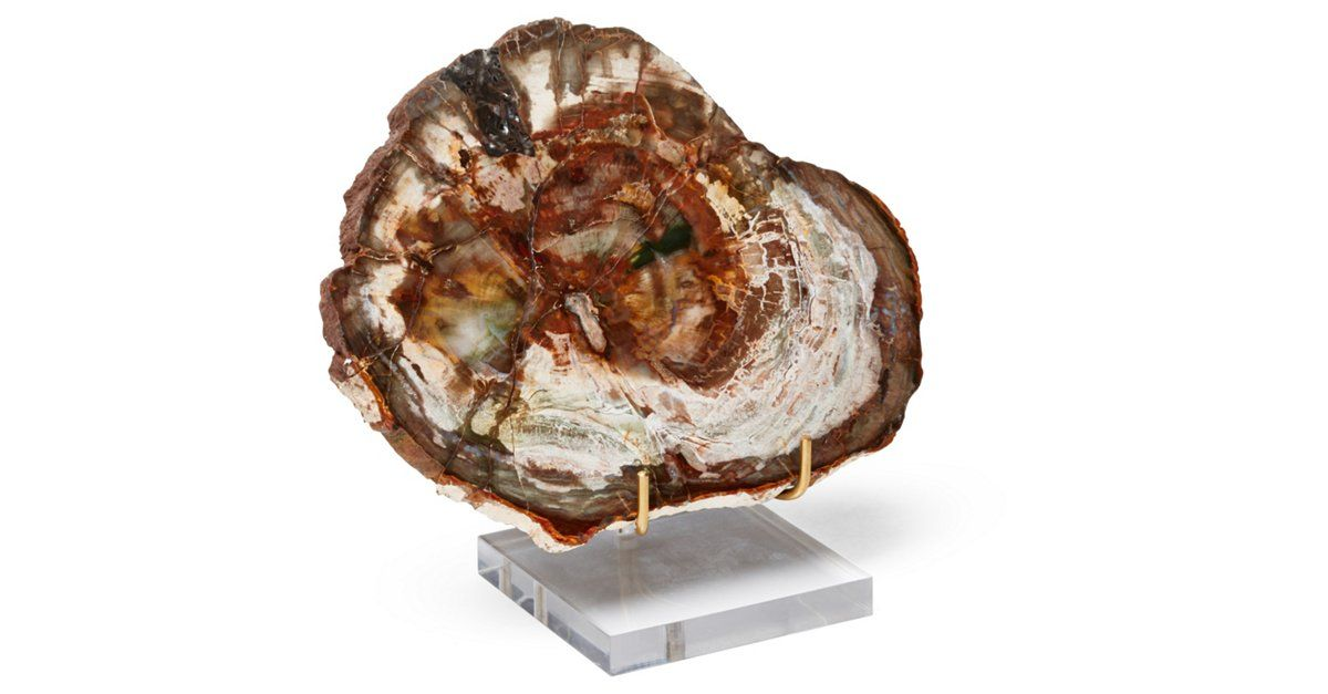 Online exclusively at One Kings Lane. Add a bit of organic opulence and cool, on-trend style to the desk, console, or nightstand with this breathtaking petrified wood objet, displayed on a clear...