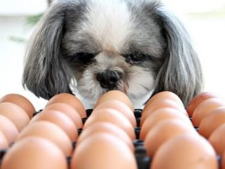 Can Dogs Eat Eggs? Are Eggs Safe For Dogs? in 2020