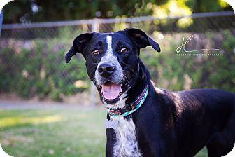 Colusa In Colusa County Ca Border Collie Mix Meet Kara A Dog For Adoption Http Www Adoptapet Com Pet 16417955 Corning Border Collie Collie Dog Adoption