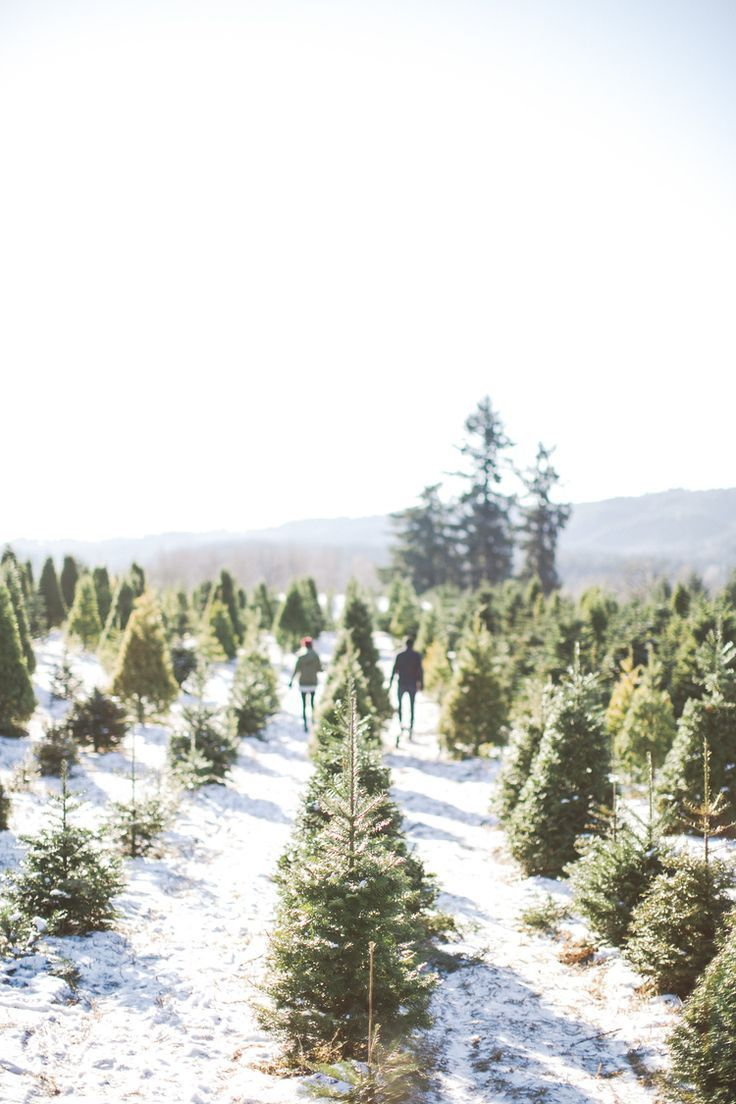 Beautiful Christmas Tree Farm In The Snow Winter Christmas Christmas Tree Farm Christmas Time Is Here