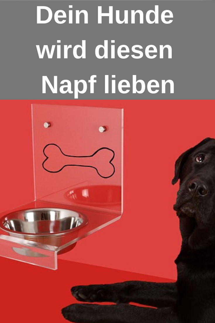 Diese Hundenapfe Wird Dein Hund Lieben Schau Sie Dir Jetzt Direkt An Hunde Hundenapf Fressnapf