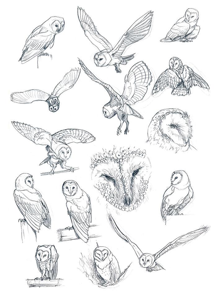 Barn-owl by Maiwenn on DeviantArt