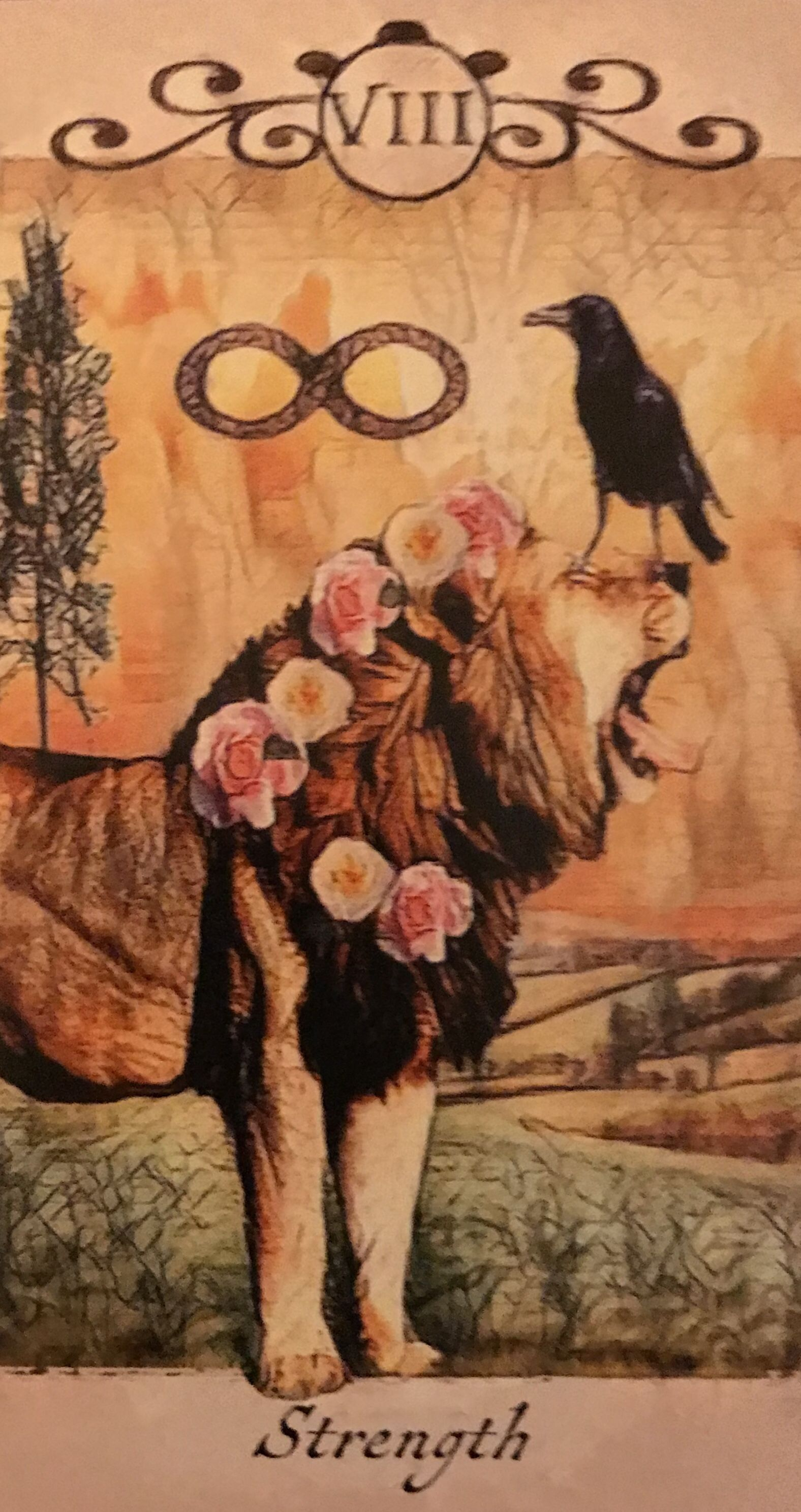 Featured card of the day strength crow tarot by mj
