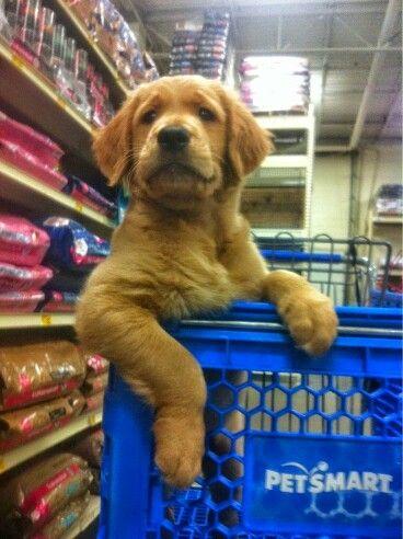 Shoppen Dog Love Puppies