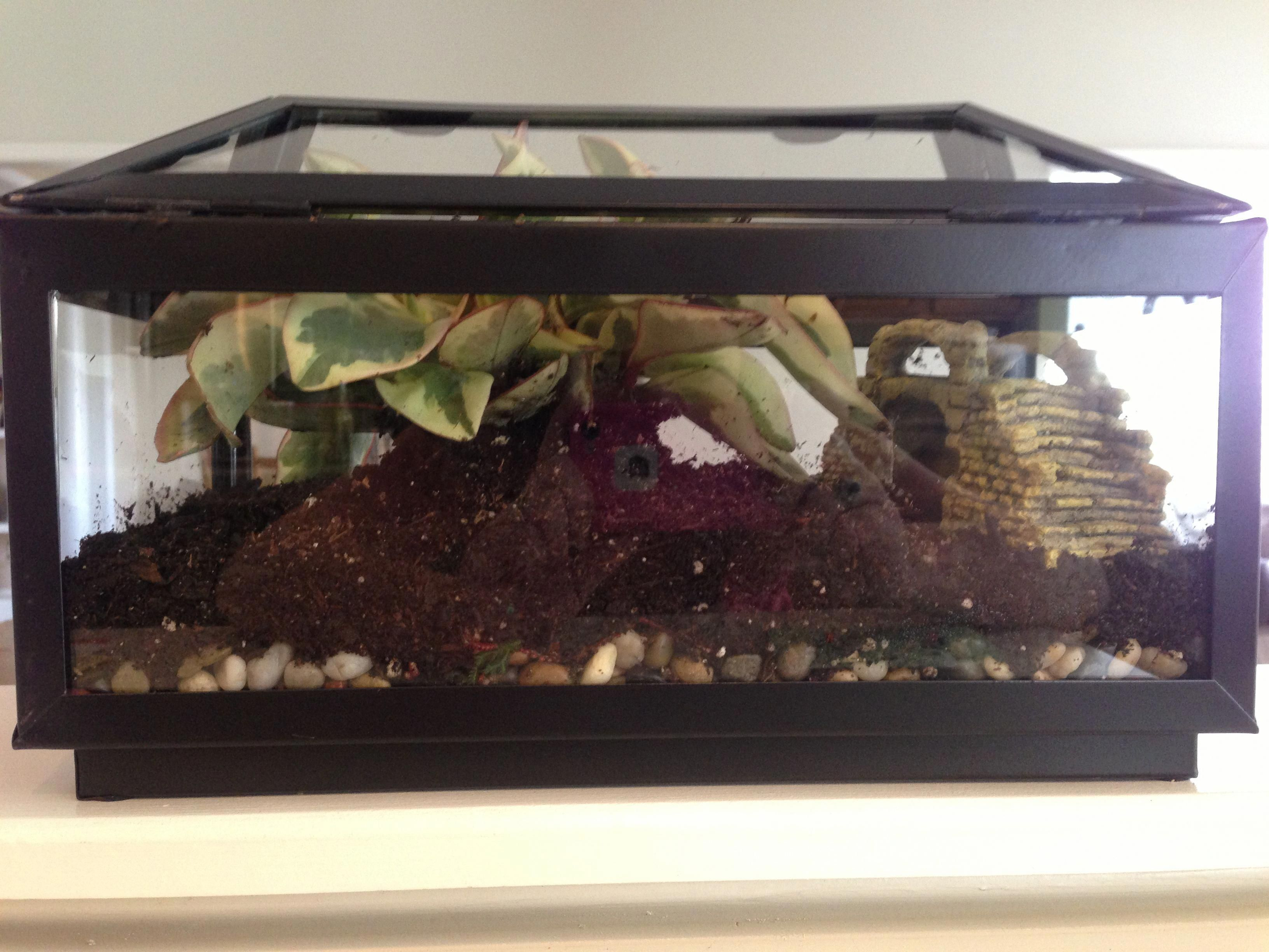 Closed Terrarium With Beautiful Lid Maybe I Could Do This For My