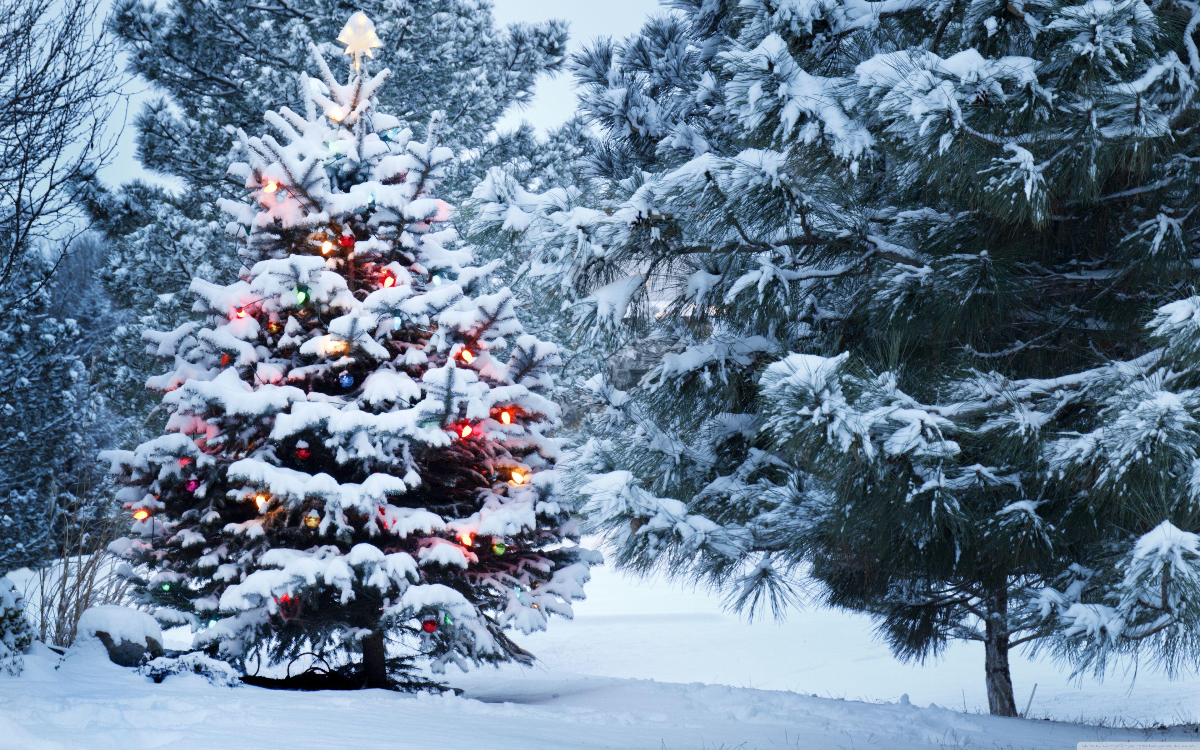 Pin By Semuel On Christmas Christmas Tree Wallpaper Snow Covered Christmas Trees Outdoor Christmas Tree