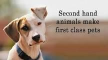 "All my pets are ""second-hand"" and loved!"