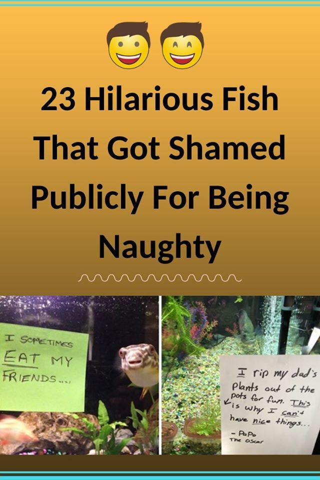 23 Hilarious Fish That Got Shamed Publicly For Being Naughty 23 Hilarious Fish That Got Shamed Publicly For Being Naughty