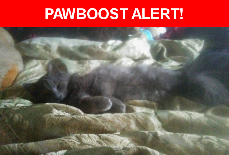 Please spread the word! Mighty Mouse was last seen in Pflugerville, TX 78660.    Nearest Address: Near Merseyside Dr & Wiltshire Dr