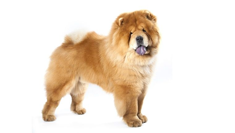 Mythical And Legendary Origins Of Dog Breed Traits Dog Breeds