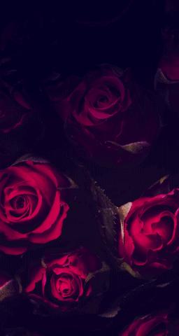 Red Flowers Wallpapers Gothic Wallpaper Best Flower Wallpaper Flowers Black Background
