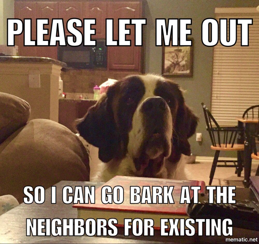 St Bernard Meme She Loves To Bark St Bernard Dogs Funny Dog Memes St Bernard Puppy