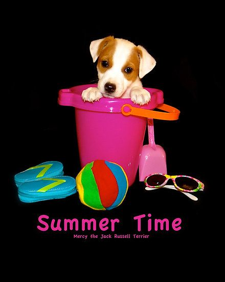 Jack Russell Terrier Puppy Puppies Summer Time Cute Puppies