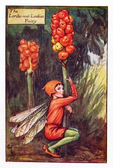 The Lords-and-Ladies Fairy, Autumn