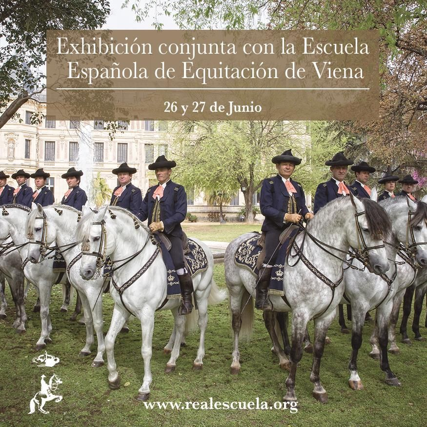 Real Escuela On Twitter Andalusian Horse Beautiful Horses White Horses