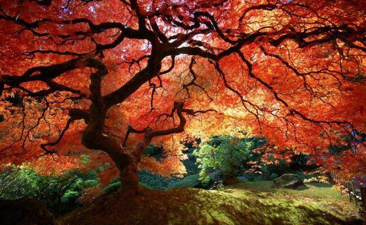 Awesome Autumn Tree
