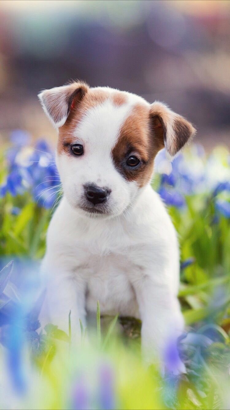 Cute puppy wallpaper for your iPhone XS Max from Everpix
