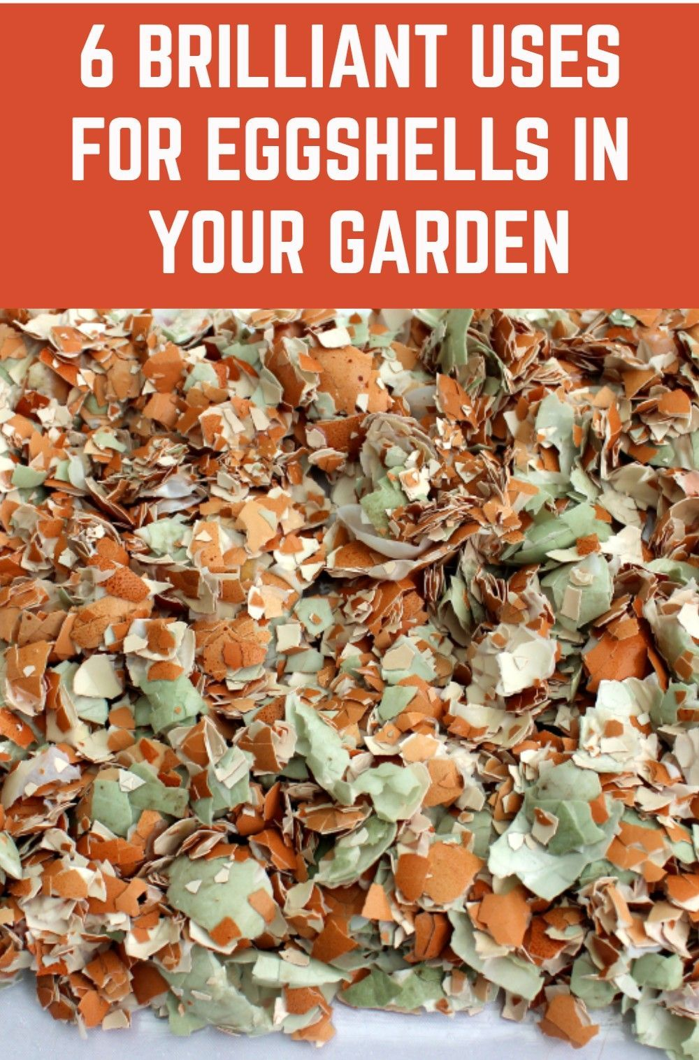 6 Brilliant Uses For Eggshells In Your Garden