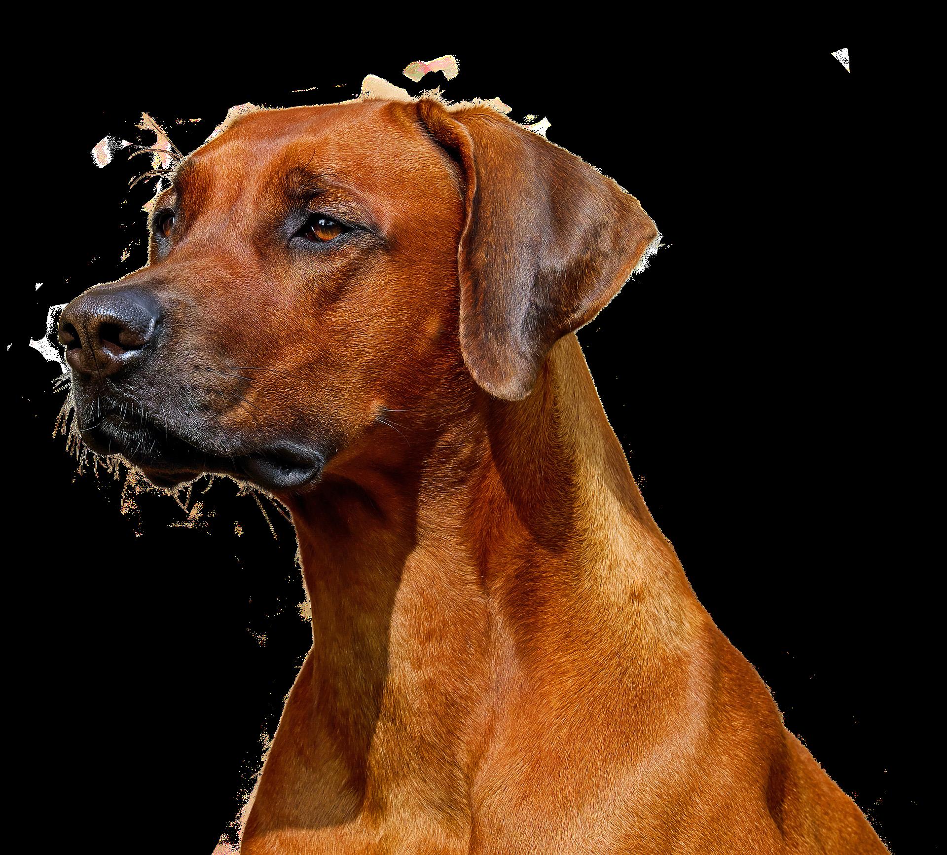 Super Freigestellt Dogs Dog Urine Constipated Dog