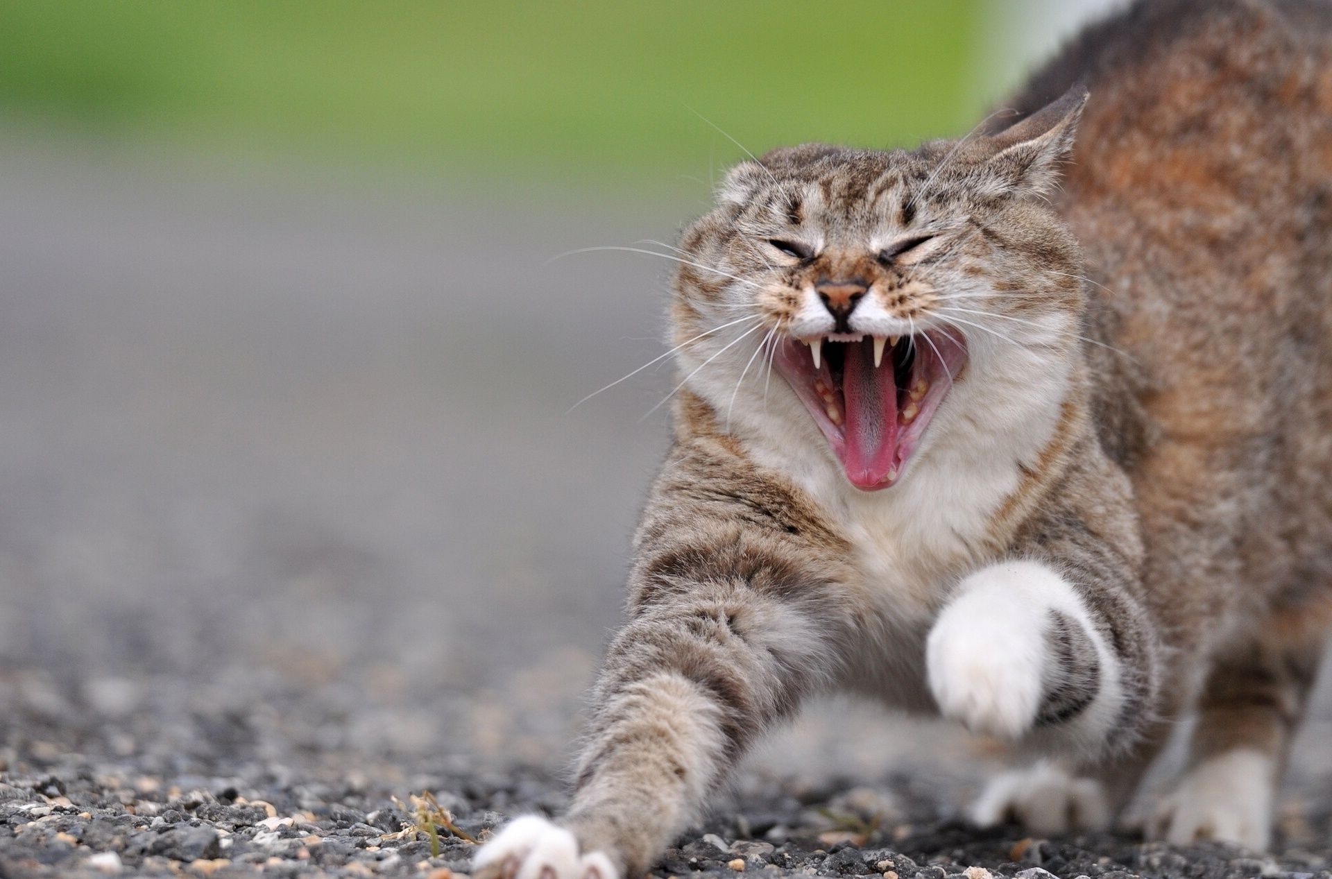 images of angry animals Angry Cat Photo 2 (With images