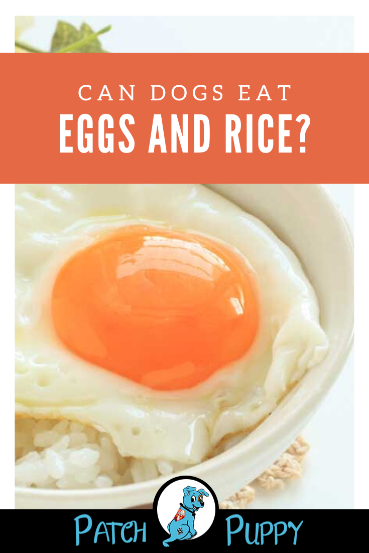 Can Dogs Eat Eggs And Rice Patchpuppy Com Can Dogs Eat Eggs Can Dogs Eat Dog Food Recipes