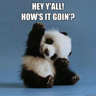 Funny pandas with captions cute panda pictures with captions funny pandas with captions cute panda pictures with captions voltagebd Image collections