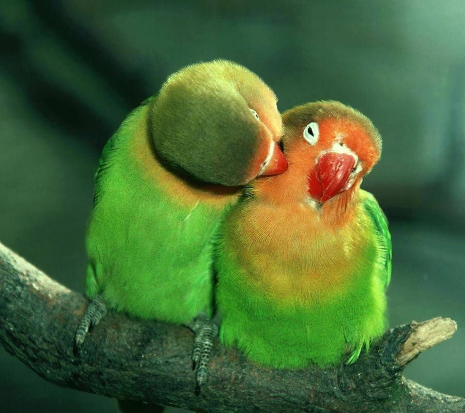 Love Bird Quotes Love Birds  Pictures Of Childrens And Animals  Pinterest  Bird