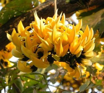 Pin on Flowering Trees: World Palash Flowers Images
