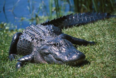 Animal Care Services » University of Florida
