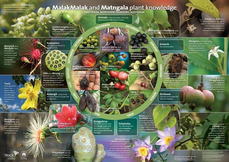 MalakMalak seasonal plants Aboriginal education