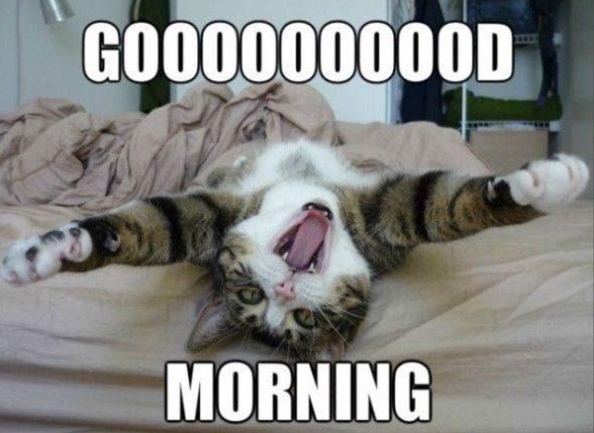 I Know Its Kinda Late But Goooood Morning Funny Good Morning Memes Good Morning Meme Morning Memes