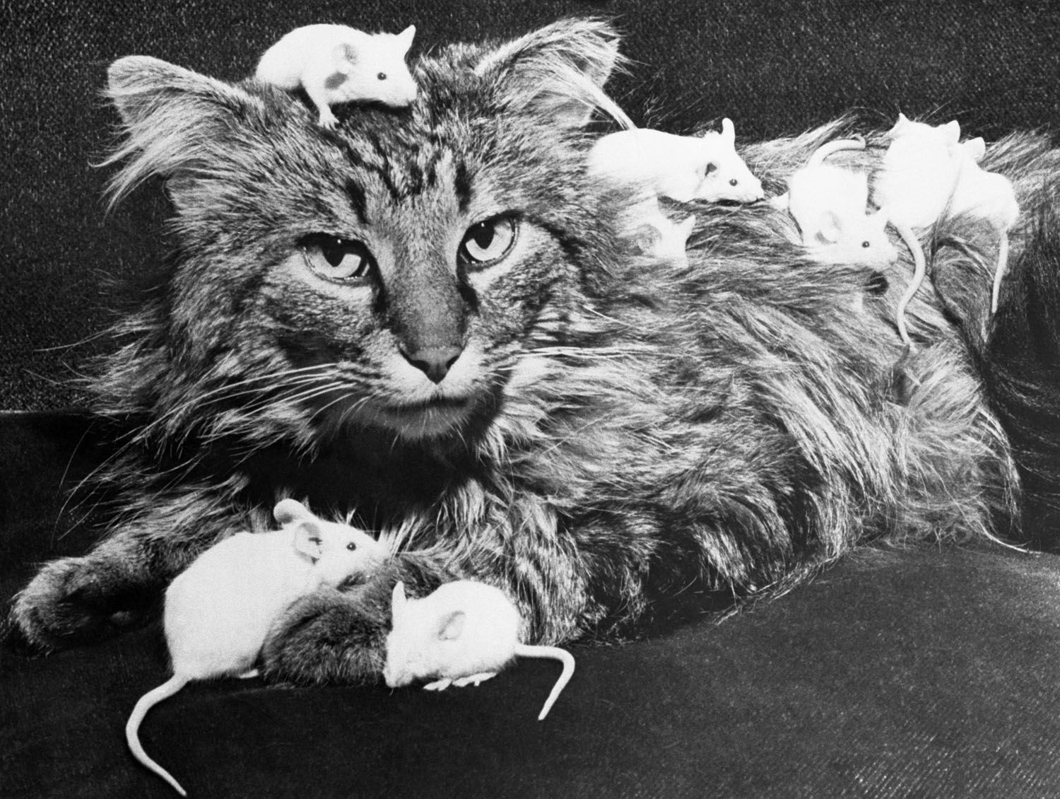 The Weirdest Photo Research of 2012 I Love Cats Cats