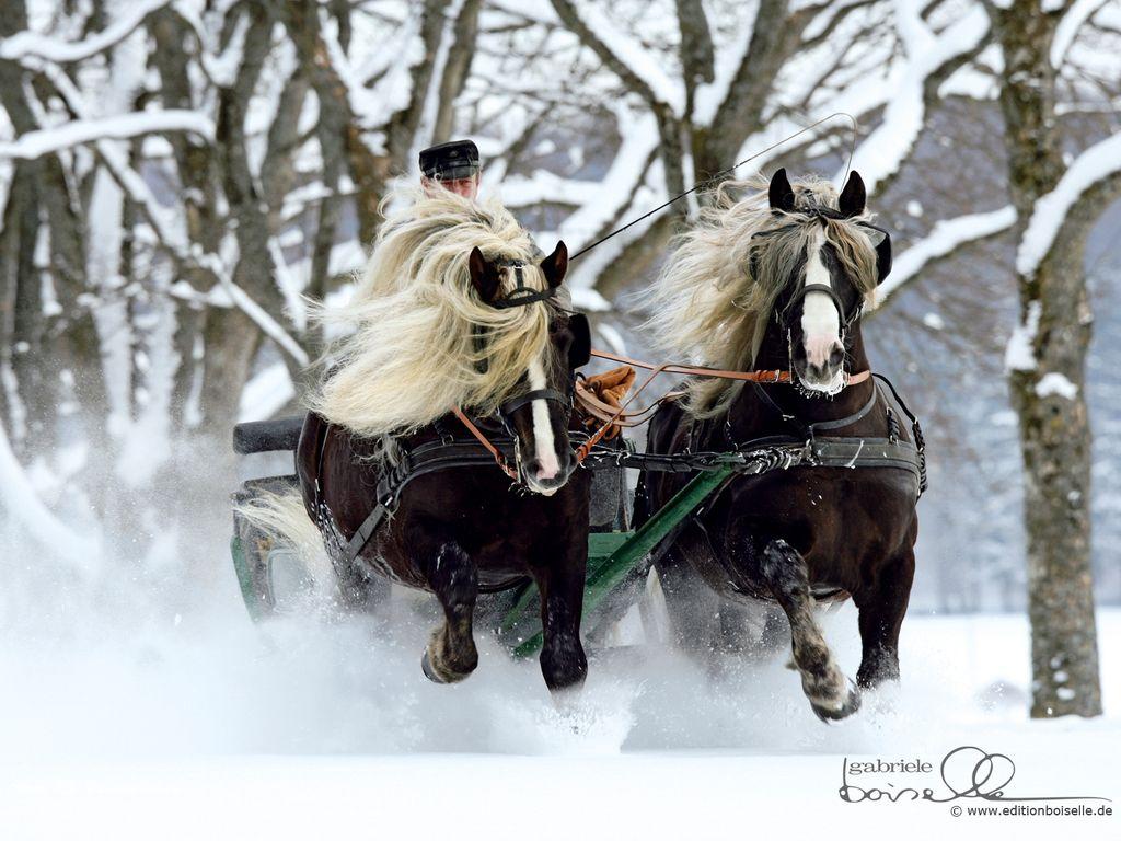 Amazing Wallpaper Horse Snow - 9beea3a09e429eb1b0432d417640445c  Collection_59871.jpg