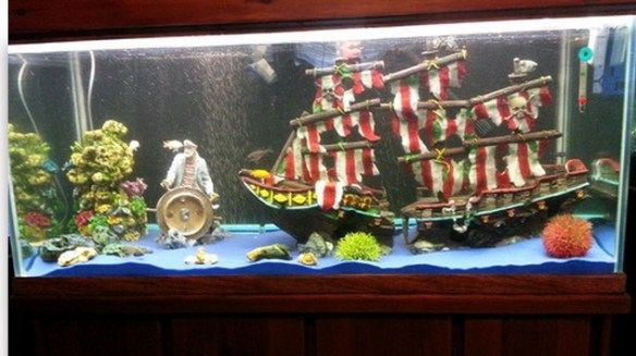 Ten Of The Craziest And Most Unusual Small Fish Tanks Money Can Buy Cool Fish Tanks Small Fish Tanks Cool Fish Tank Decorations