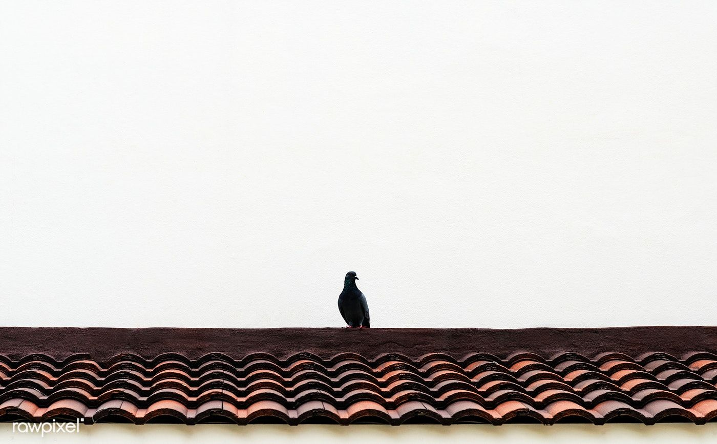 Small Bird Perched On The Roof Free Image By Rawpixel Com Teddy Rawpixel Bird Perch Small Birds Vintage Parrot
