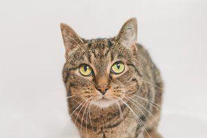 Holliwood Animal Welfare League Kitten Adoption Animals