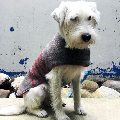 Must see Clothes Army Adorable Dog - 9bef7209f502eb18bc44fc1286721ddd  Graphic_721578  .jpg