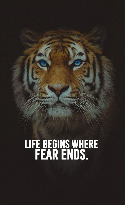 Life Quotes Fear Motivation Inspirational Dailyquotes Success Entrepreneurship Tiger Quotes Lion Quotes Warrior Quotes