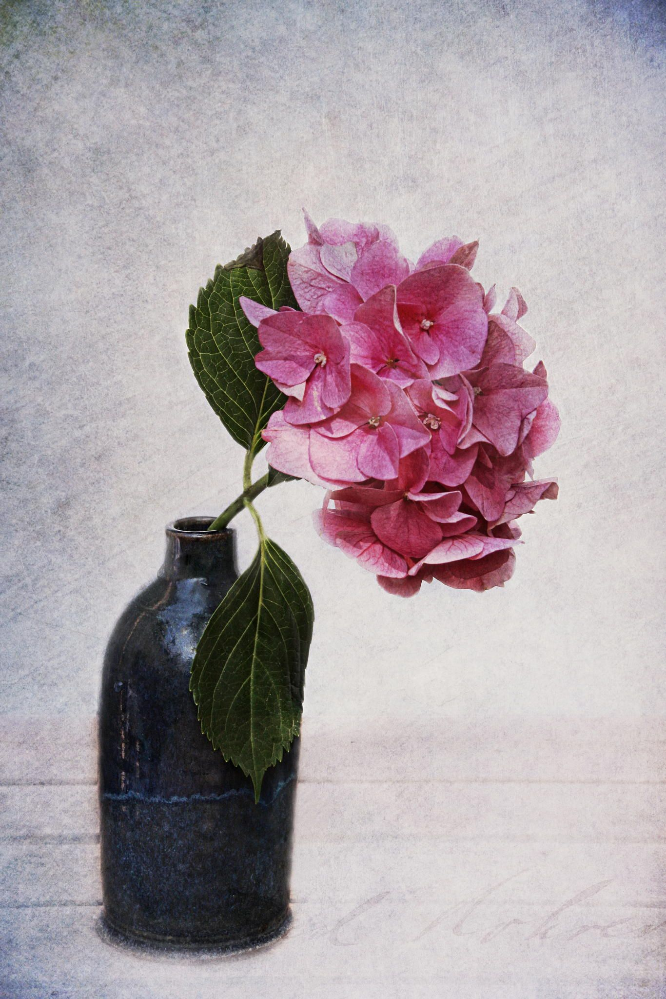 hydrangea by Claudia Moeckel on 500px
