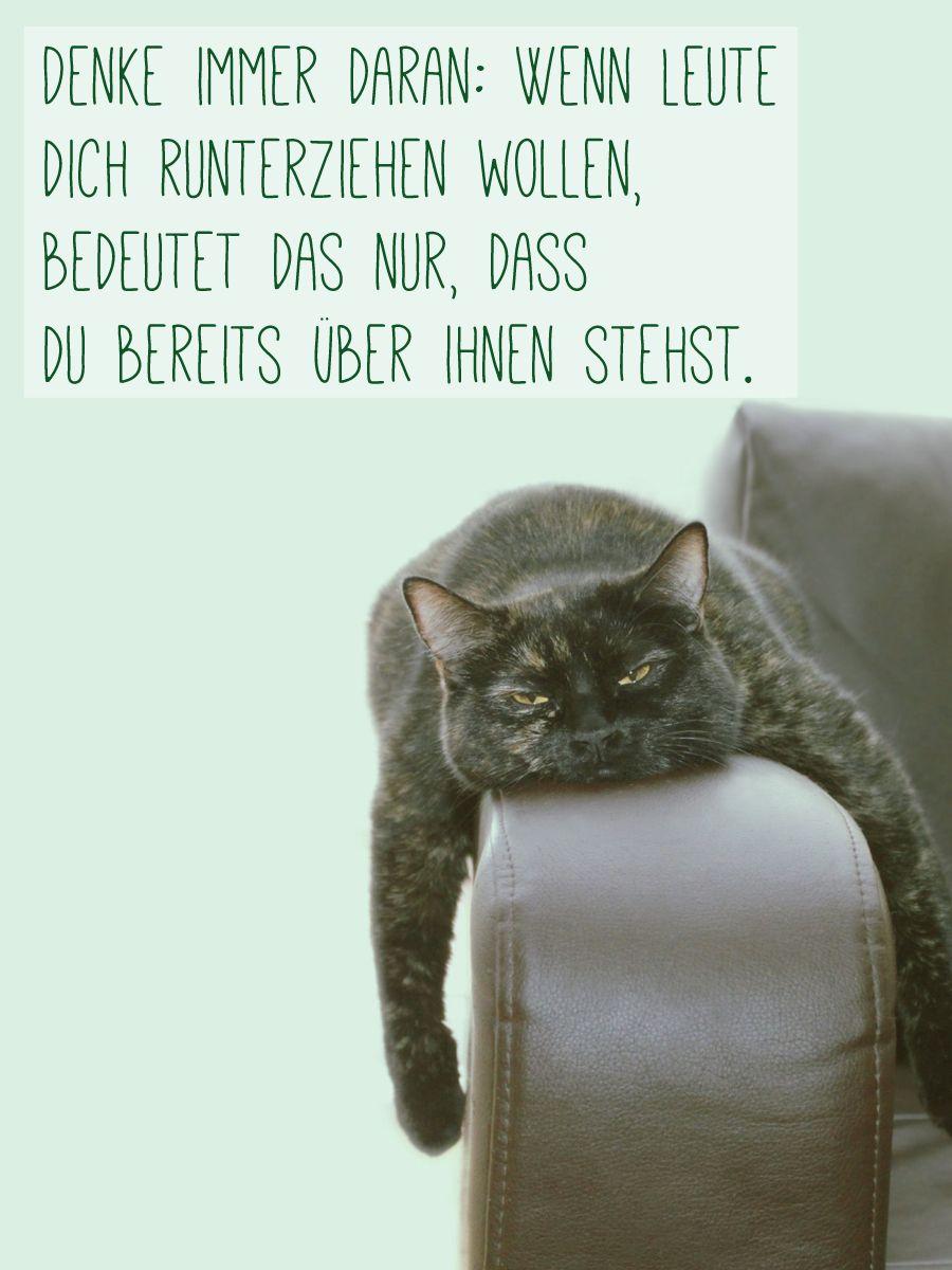 kluge sprüche bilder Noch mehr kluge Sprüche auf gofeminin.de #spruecheleben | CATS  kluge sprüche bilder