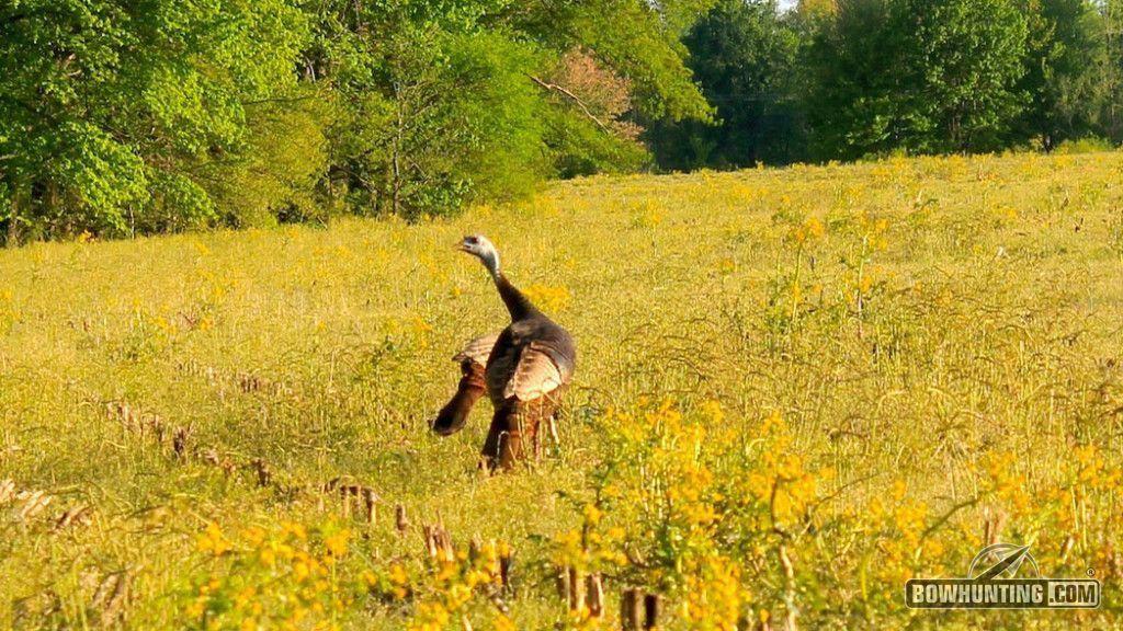 How To Call Turkeys turkeyhunting Turkey calling