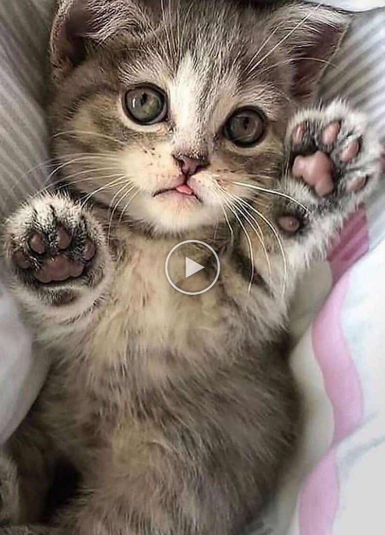 This Signs That Your Cat Needs More Attention In 2020 In 2020 Beautiful Kittens Crazy Cats Cats